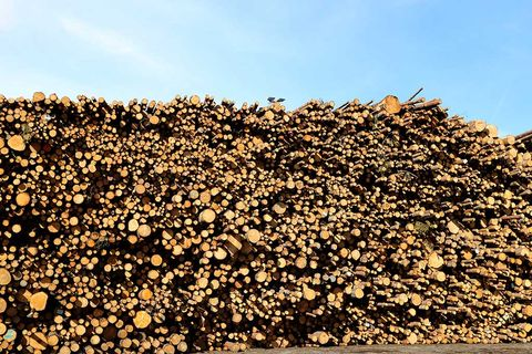 ABG höjer flera skogsaktier
