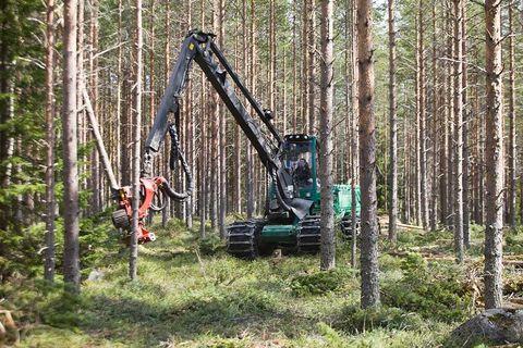 Lättnadsrally i skogen
