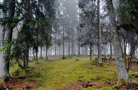 Danske sänker skogsbolagen