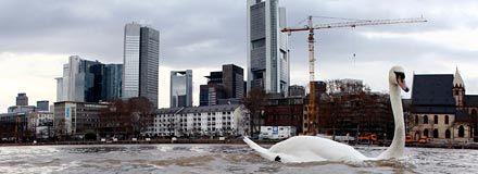 ECB sköljer bort risken