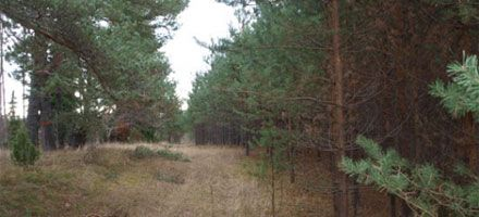 En tallskog på Latvian Forests mark Kalnareini 2.